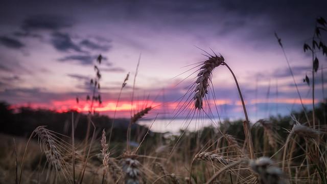 SunSet Pointe du Roselier