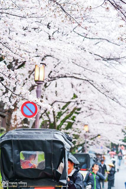 十年,京都四季 | 卷四 | 那兒春色滿城 | 15
