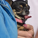 All About Dogs show at Highlands Park
