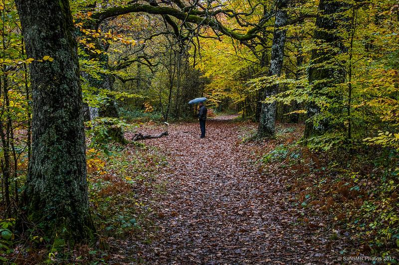 Interpretando el bosque