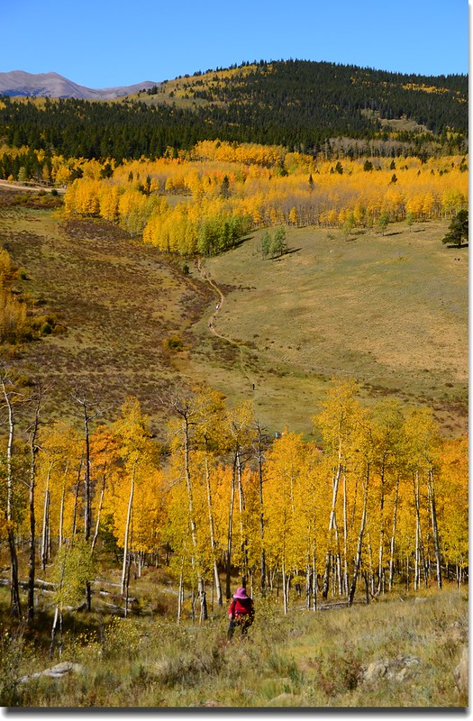 Fall colors, Kenosha Pass  (17)
