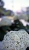 The flower of hydrangea in neighborhood 2017/06 No.8(taken by film camera). by HIDE@Verdad