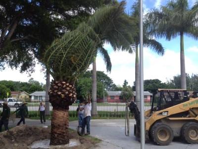 Residential Lawn Care Miami