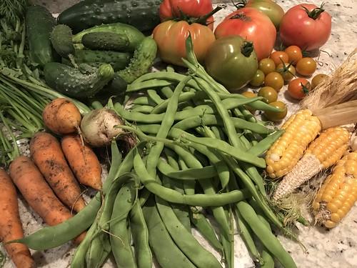 harvest IMG_0171
