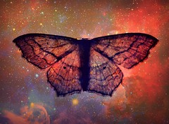 With his wings unfurled he travels the stars....