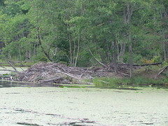 Beaver Dam at Bays Mountain Park and Planetarium -- Kingsport, TN, August 10, 2017