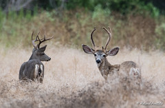 Two Bucks (Brothers?)