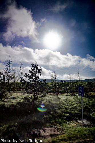Eastern Ireland Countryside-16