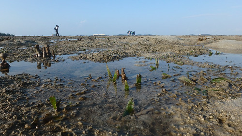 Seagrasses of Terumbu Raya