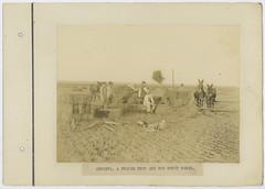 Alfalfa, A Staple Crop And Big Money Maker.