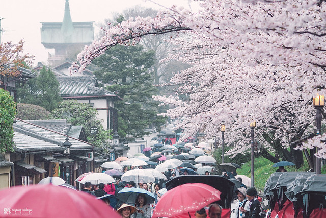 十年,京都四季 | 卷四 | 那兒春色滿城 | 16