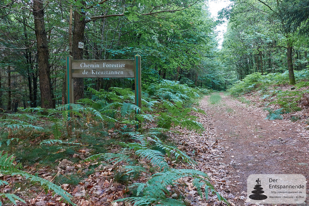Chemin Forestier de Kreuztannen