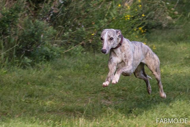 Hunde am Baggersee (und in der Heide)