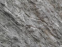 Petroglpyh of a goat in Gobustan