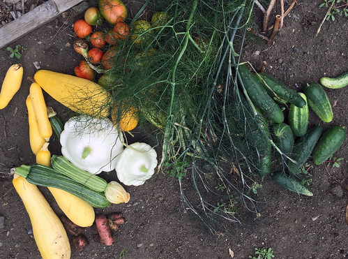 harvest IMG_1673