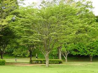 昭和の森 2 木々 04