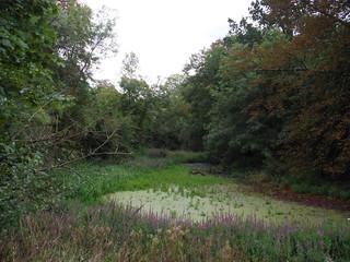 Part of Ornamental Pond fallen dry