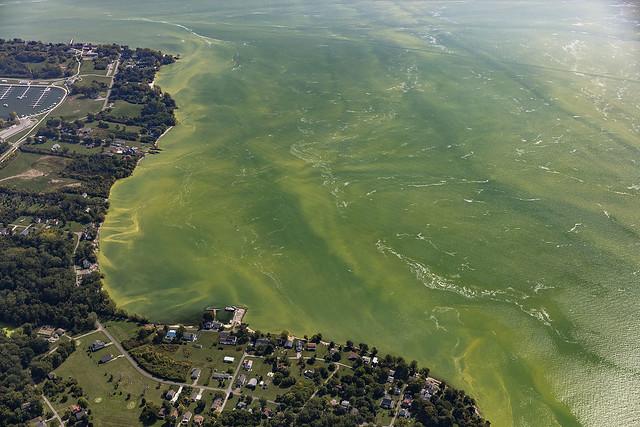 toxic algal bloom in Lake Erie