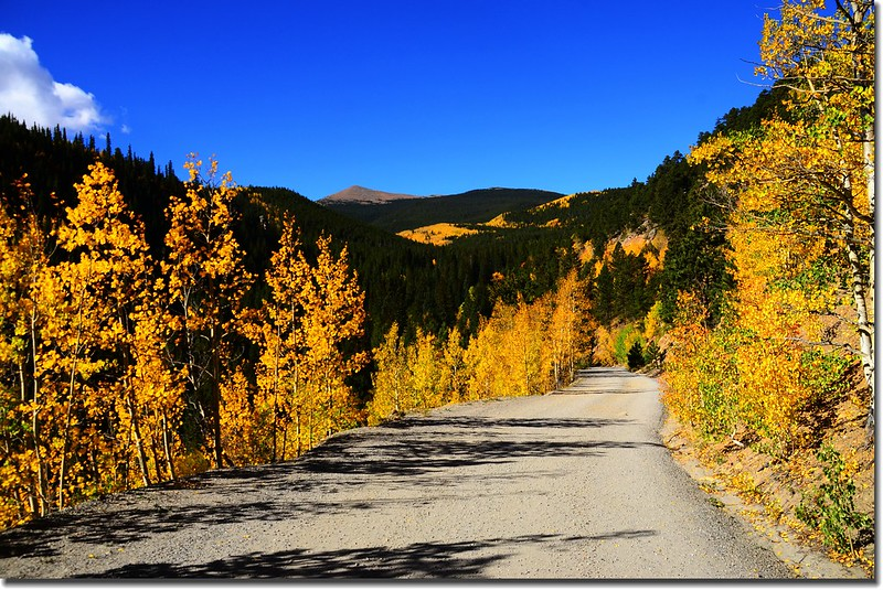 Fall colors, Mount Evans Scenic Byway, Colorado (22)