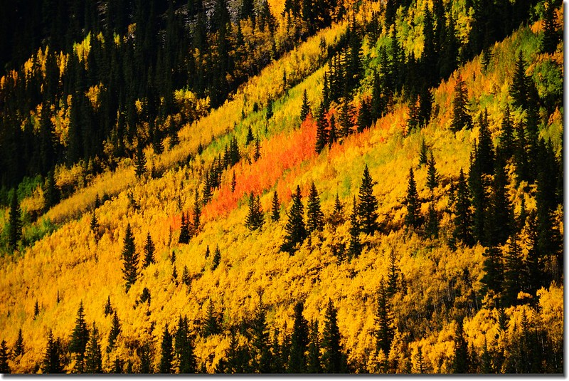 Fall colors, Guanella Pass, Colorado (8)