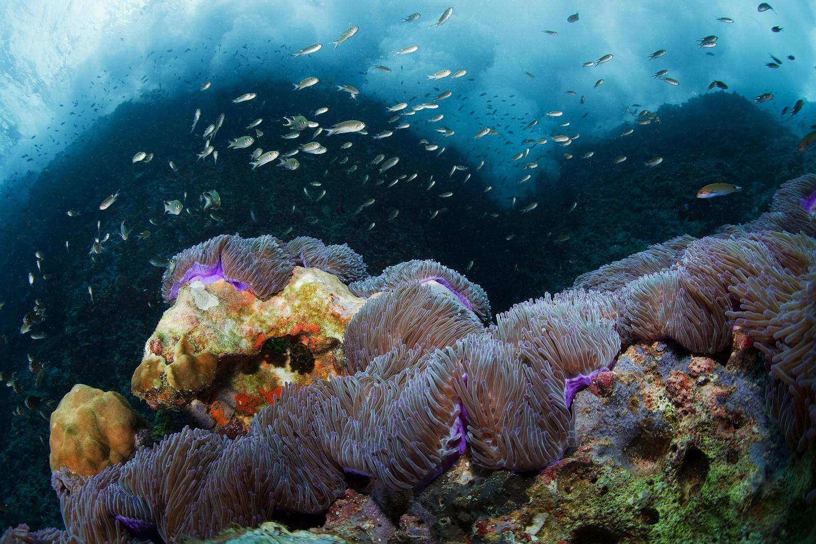 кофе ваза картинки жизнь в морях и океанах разновидность глистной