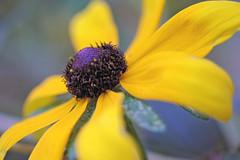 garden flowers IMG_7076