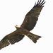 International Birds of Prey Centre (86)