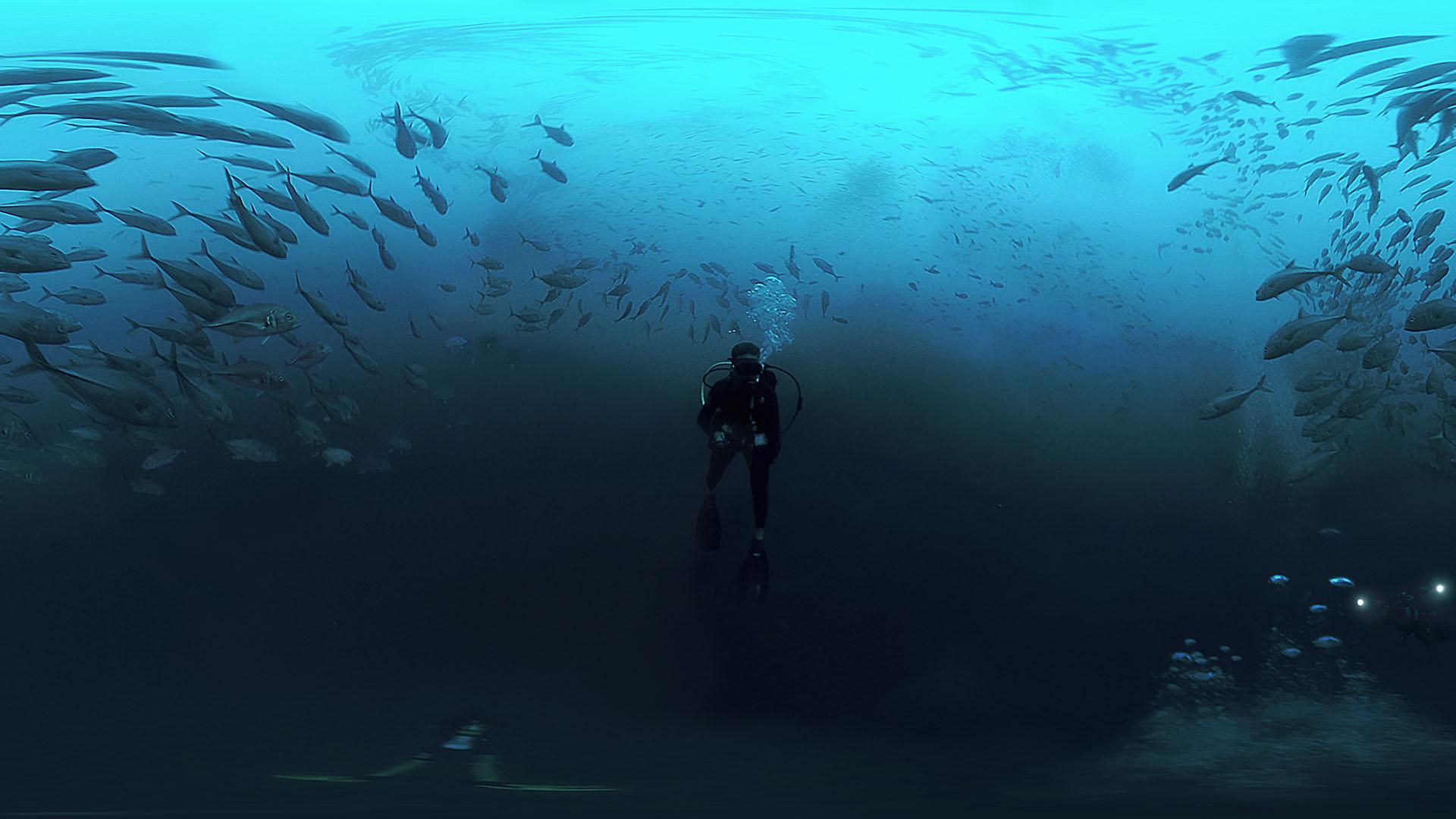 15 cocos_shark_island