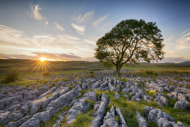 ASH TREE, Canon EOS 5D MARK III, Canon EF 16-35mm f/4L IS USM