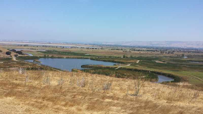 Hilltop view of the marshland in Coyote Hills Park