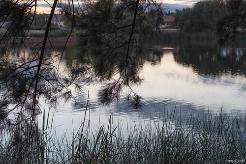 Henley Brook at dusk