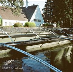 Bonneville Fish Hatchery #1