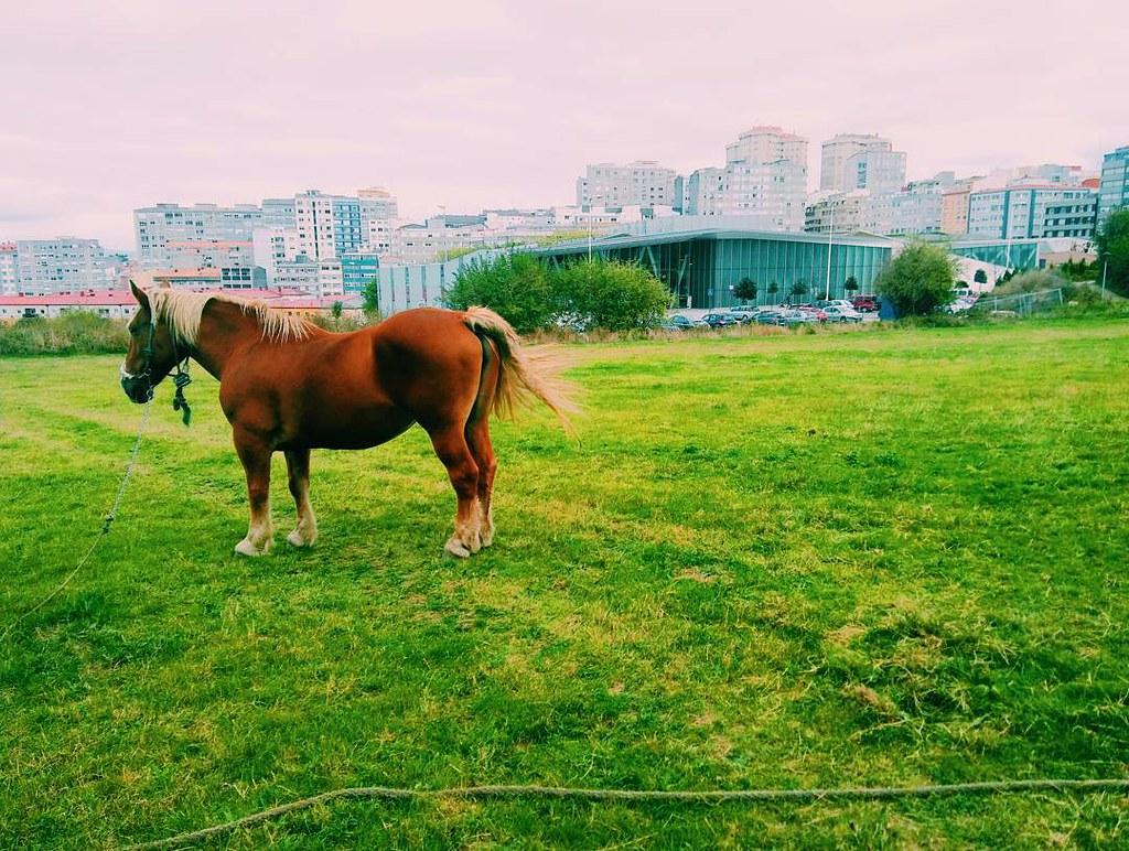 Coruña verde. Contrastes urbanos. #contrastes #horse #urbannature #photography #phonephoto #Coruña