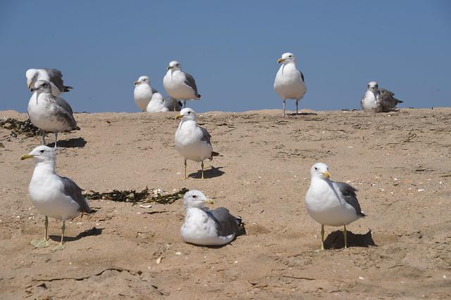 Seagulls Hanging Out at, Nikon D810, AF-S Nikkor 28-300mm f/3.5-5.6G ED VR