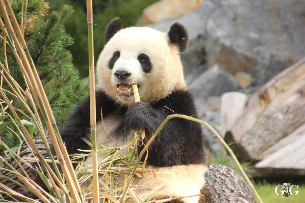 Besuch Zoo Berlin 13.08.178