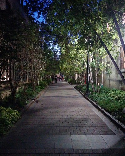 Alley of birch trees by night #toronto #universityoftoronto #birch #trees #lights #evening #latergram