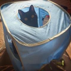 This blue cube has a hole. Please fix. Thank you. . #blackcat #blackcats #cat #cats #kitty #kittycat #kittygram #blackcatsofinstagram #exferal #queencat #catsofinstagram #catsagram #ネコ #ねこ #猫 #neko #kuroneko #黒猫 #クロネコ #くろねこ