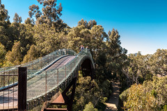 Tree top bridge Perth Kings Park