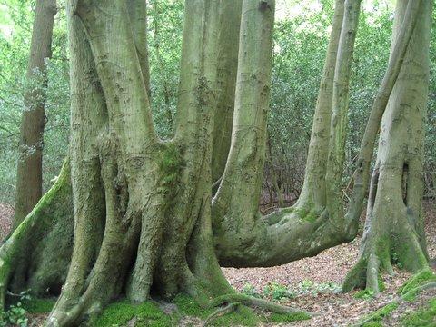 distinct trees