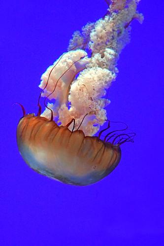 DSC08919 - Jelly Fish