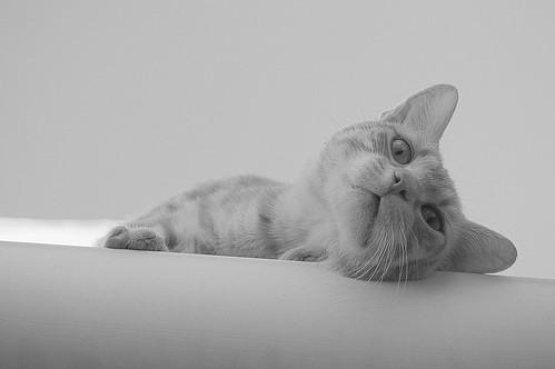 Un Gato sin Nombre