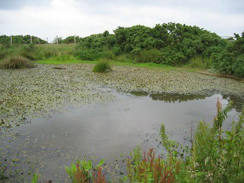 17 pond2