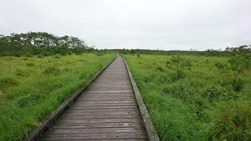 湿原散策、一面のクソミドリ
