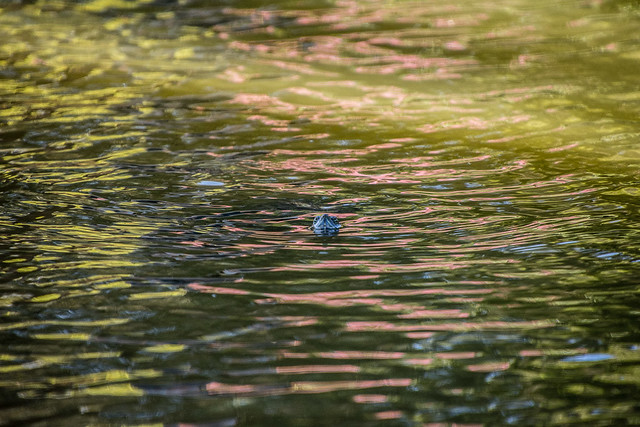 turtle & reflections