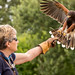 International Birds of Prey Centre (52)