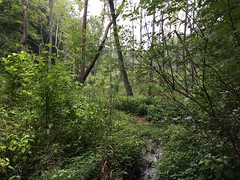 American Chestnut Land Trust (south tract)