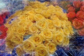 Roses 4 All