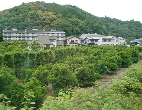 jp-uwajima-kubokawa (2)