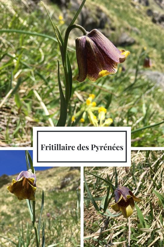 03_Fritillaire