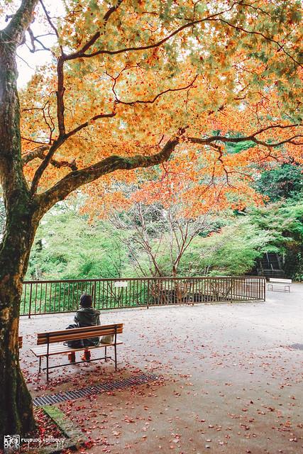 十年,京都四季 | 卷二 | 年月輪轉 | 16